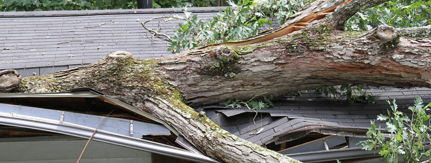 Downed tree on house roof.