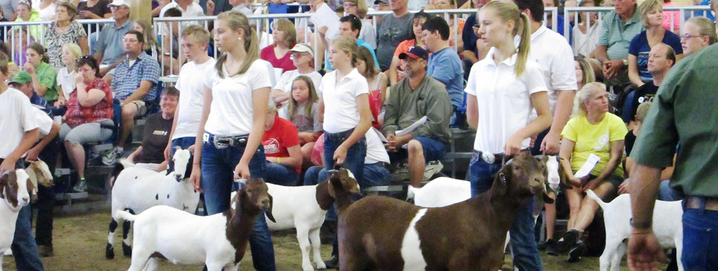 2 girls showing 2 goats at the fair
