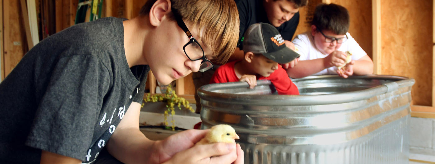 boy looking at chick