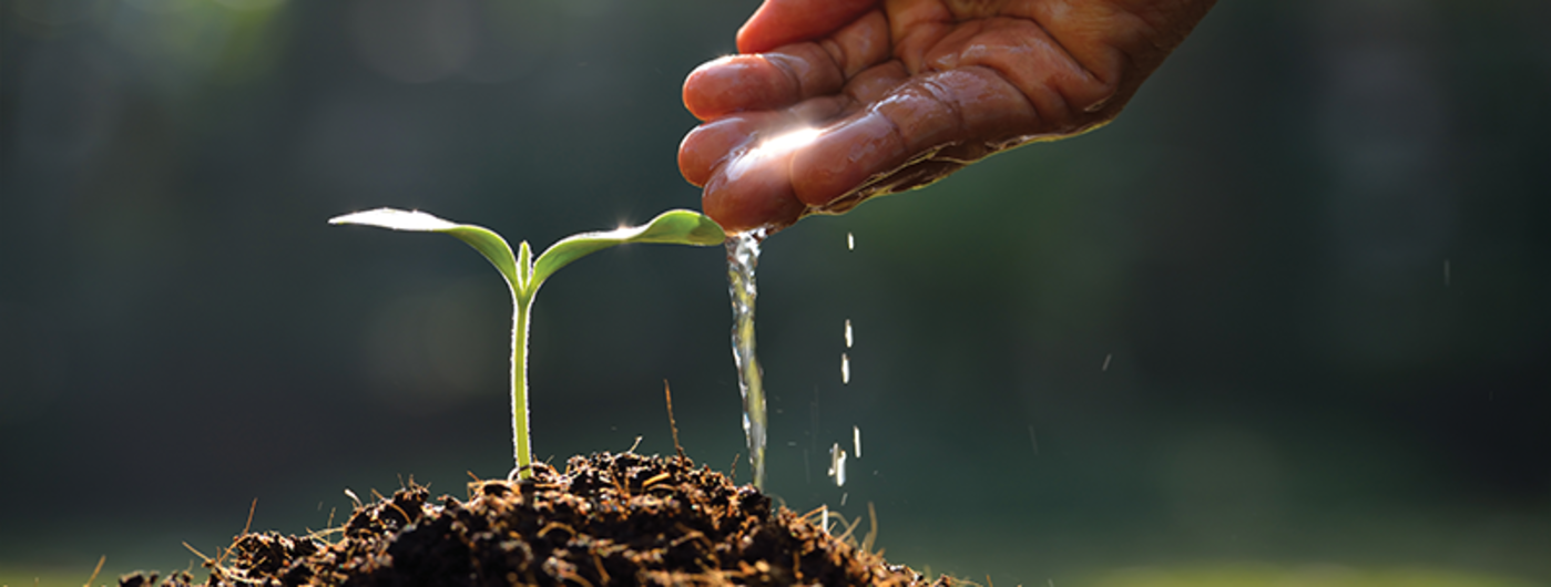 Water Wisely: Start in your own backyard | UMN Extension