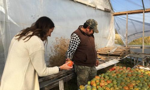 Javier Garcia and Molly Zins looking over harvested tomatoes.
