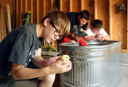 Martin County 4-H Members with their poultry projects