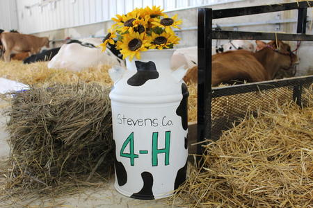 Stevens County 4-H decorated milk can in dairy barn with cattle in the background