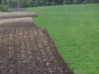 Field that is half alfalfa, half tilled