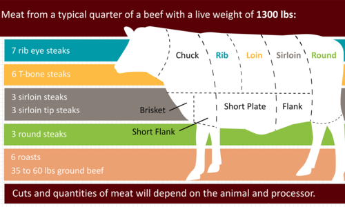 cuts of beef from a quarter cow