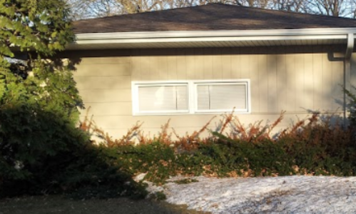 Side of gray house with dark green evergreen hedge along bottom quarter of the building with brown branch tips. Pile of melting snow is in foreground.