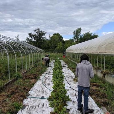 people working on gardening between two large greenhouses