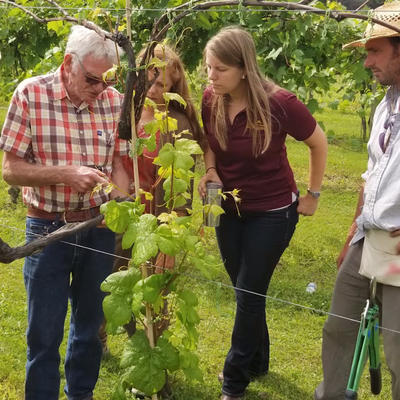 Annie Klodd in vineyard with three grape growers