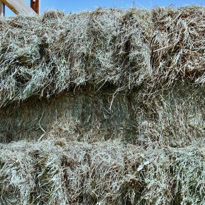 Small hay bales stacked in a wagon