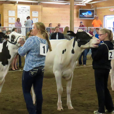 youth dairy judging contest