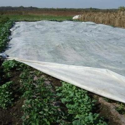 White floating row cover spread over crops in field