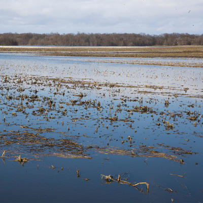 Crop field flooded with water