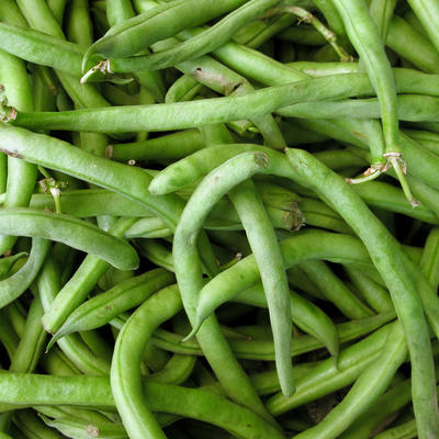 Harvested green beans