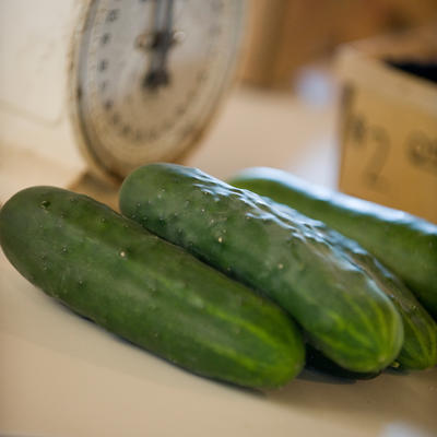 Green harvested cucumbers on a table