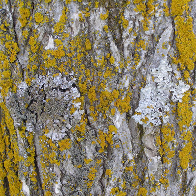 close-up of tree bark with green and gray colored patches