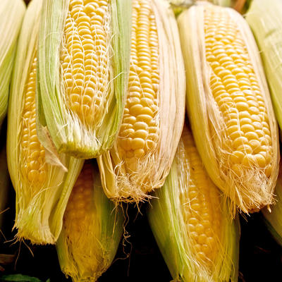 Yellow corn on the cob