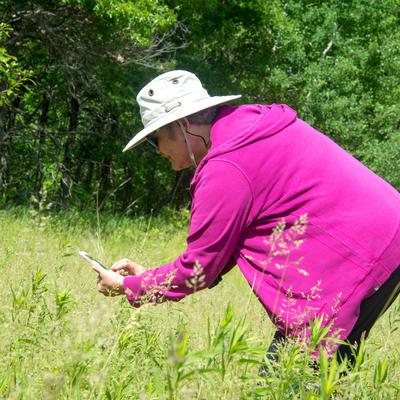 Master Naturalist identifying plants in a field with a phone application.
