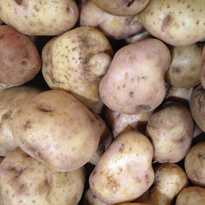 Harvested brown Peruvian potatoes