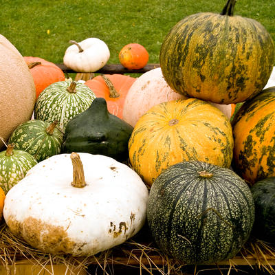 Growing Pumpkins And Winter Squash In Home Gardens Umn Extension