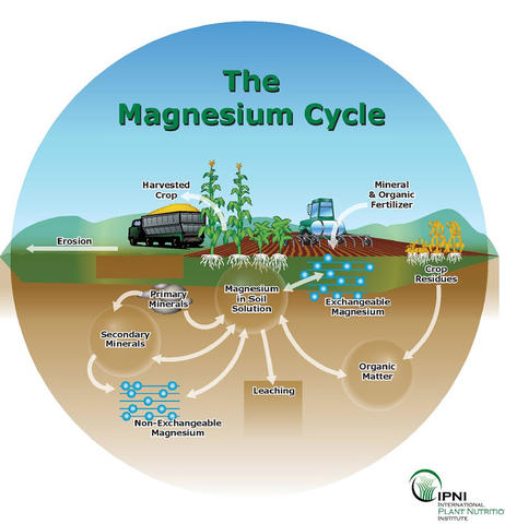 Generalized soil magnesium cycle representing Mg in the soil and where Mg may be applied or removed on an annual basis