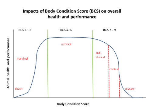 chart showing body condition score on health and performance.
