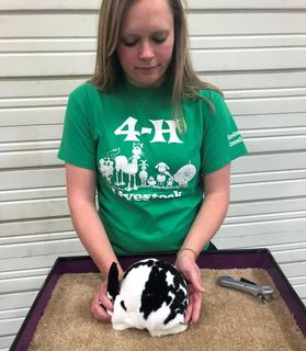 4-H: stock talks-girl with rabbit