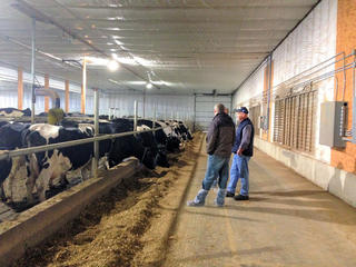 Two people standing in a long aisle in a modern dairy barn