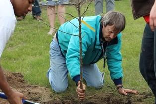 Students plant an apple tree