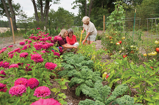 three women working in a garden with rows of zinnias, kale, peppers and tomatoes surrounded by a wire fence