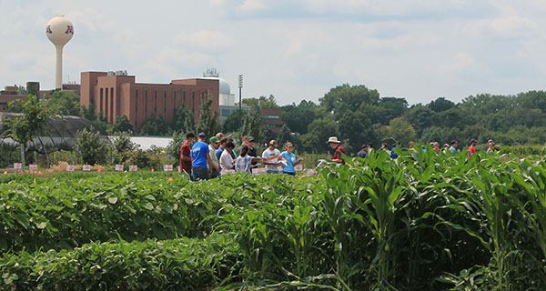People in U of M crop field