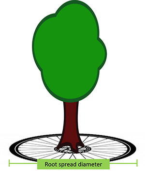 Colored drawing of tree superimposed on a bicycle tire to represent the spoke-like growth of tree roots.